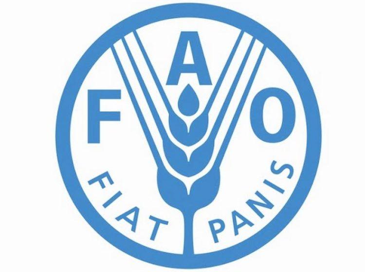 Süt Sektör Özeti ve Temel Bilgiler – FAO