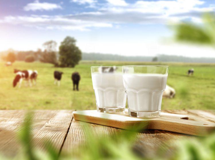 TUİK Süt Ve Süt Ürünleri Üretim İstatistikleri – Mayıs 2019